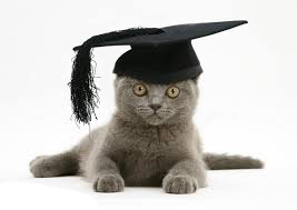 Traumatised graduation cat